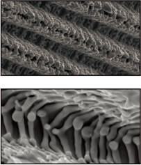 Microstructural uniformity of Laser-Lok